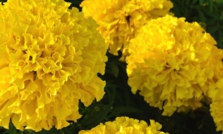 Top 5 Sites To Buy Flowers Online