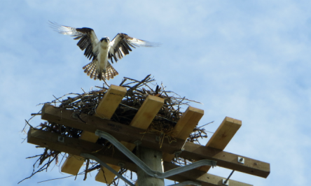 Bird Repeller Devices – Bird Netting And Bird Spikes