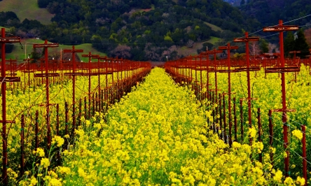 Why You Should Visit Wine Country In The Spring